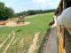 Jurapark w Bałtowie - 4